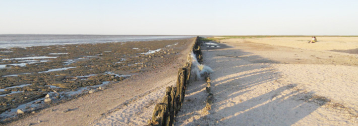 Waddeneilanden-daten-in-Friesland